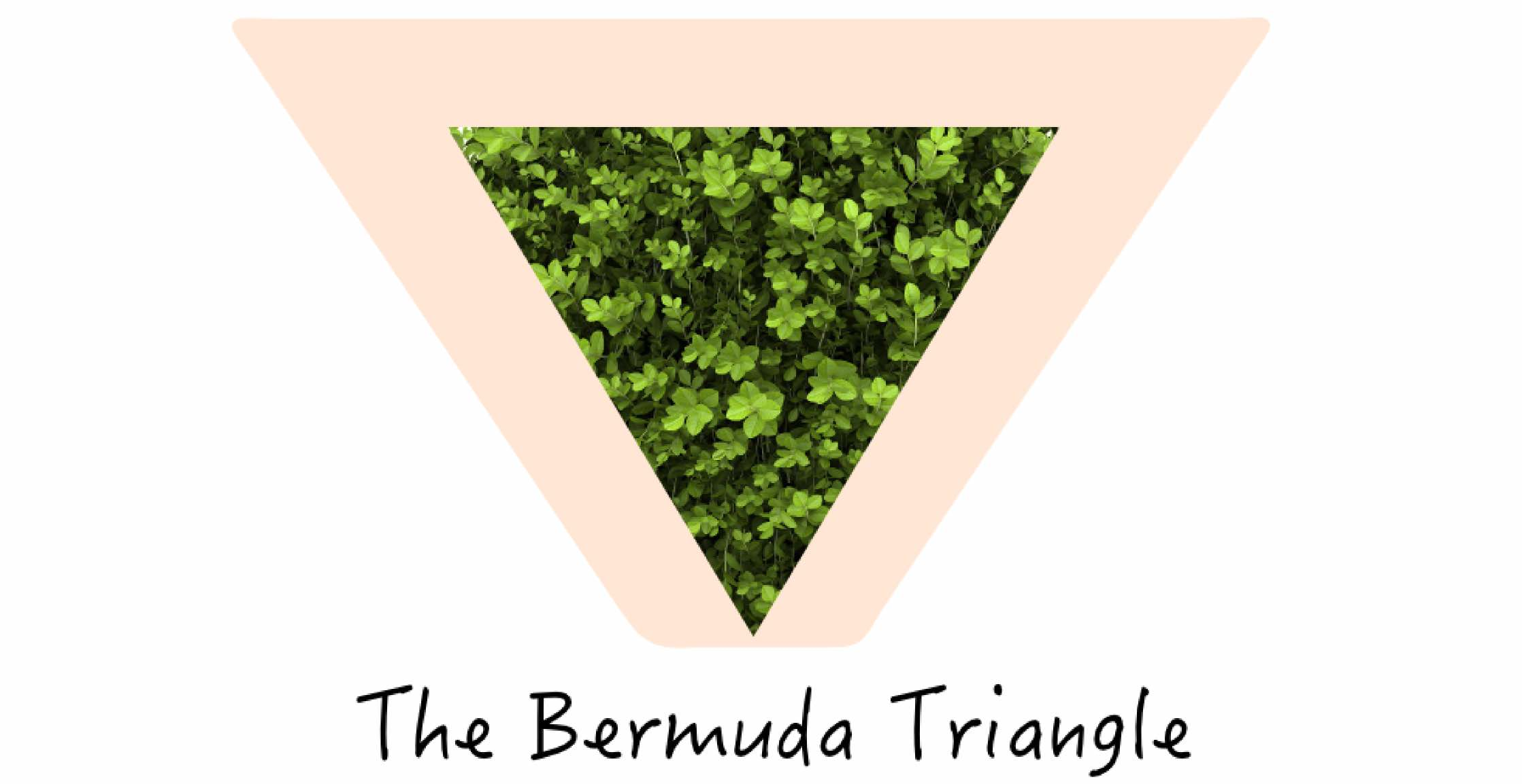Pubic Hair Styles The Bermuda Triangle